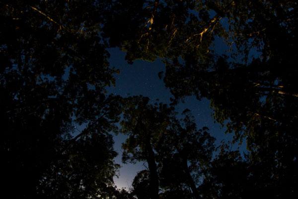 Cielo stellato ed eucalipti nel Western Australia