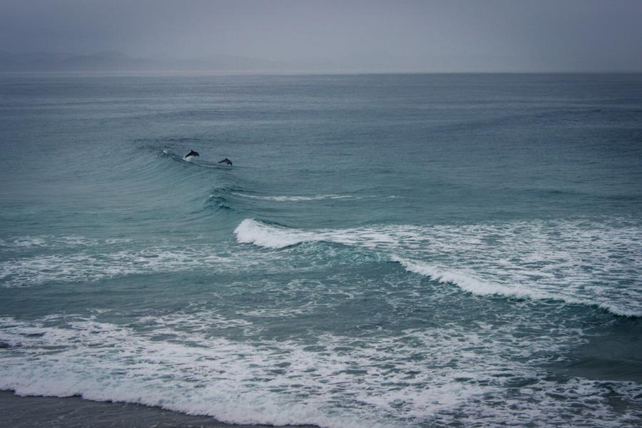 I delfini di Byron Bay